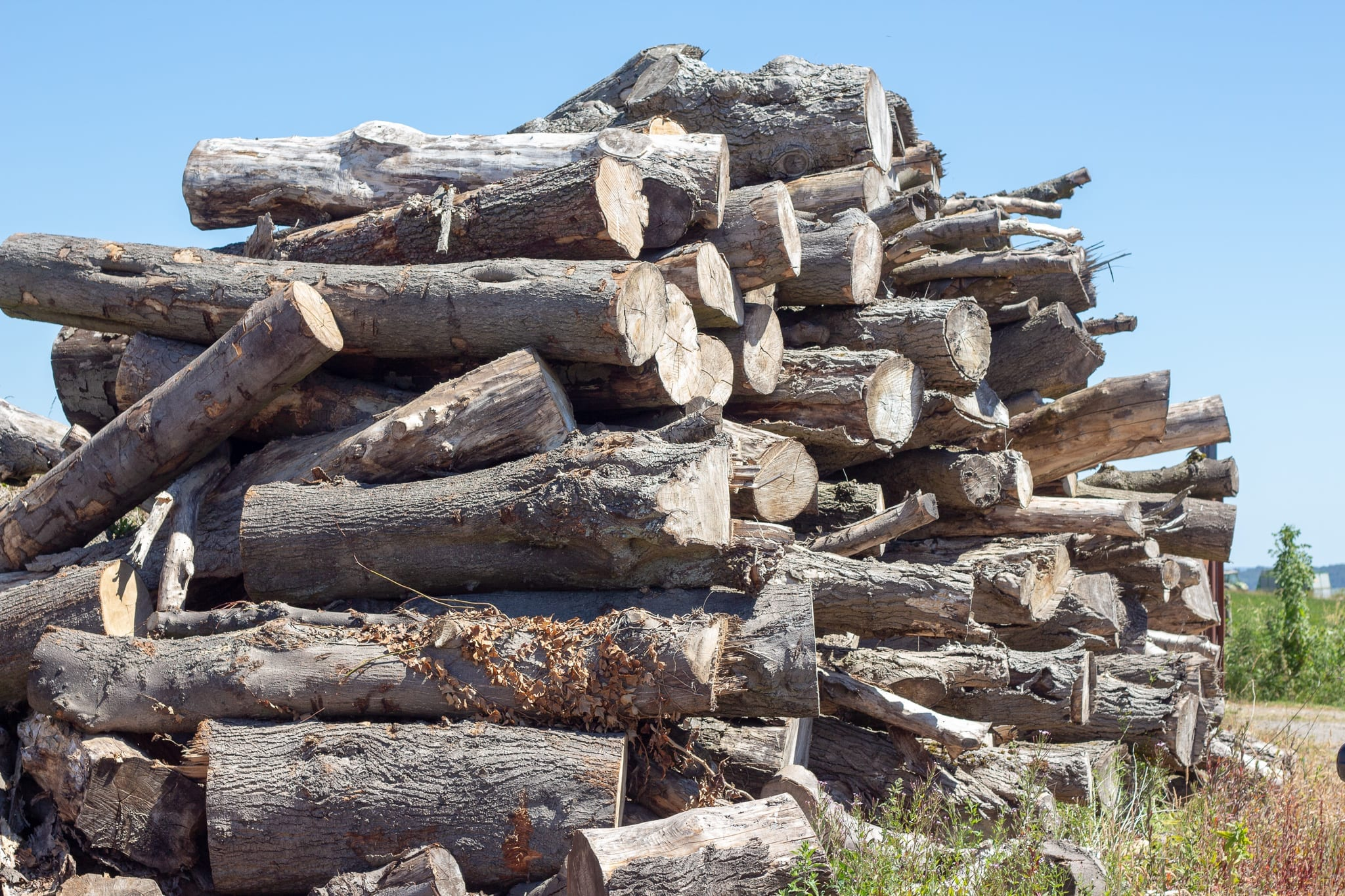 Stack of timber ready for processing into firewood